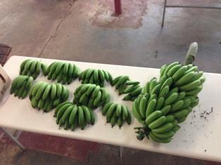 Munga Banana